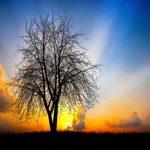Gracias al Señor Jesús tenemos asegurado un lugar por la eternidad