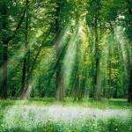 Si tiene tiene fe, con el poder de Dios avanzará muy lejos