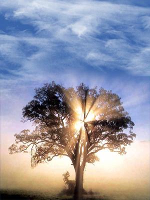 El Señor Jesucristo transforma nuestro mundo