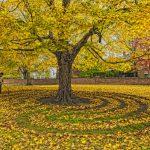 árboles, laberinto