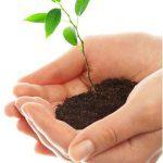 planta, siembra